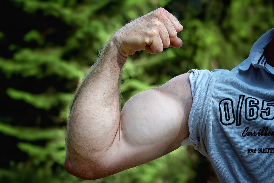 muscles-811479_960_720