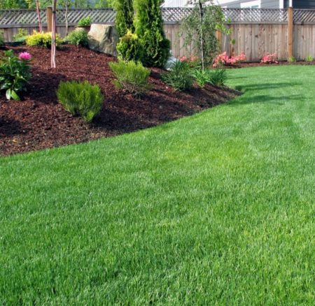Maintaining a Healthy Lawn on a Budget